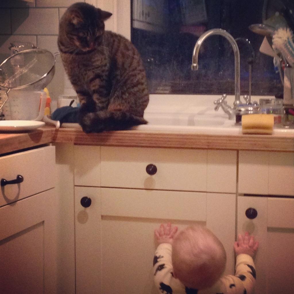 baby chasing cat