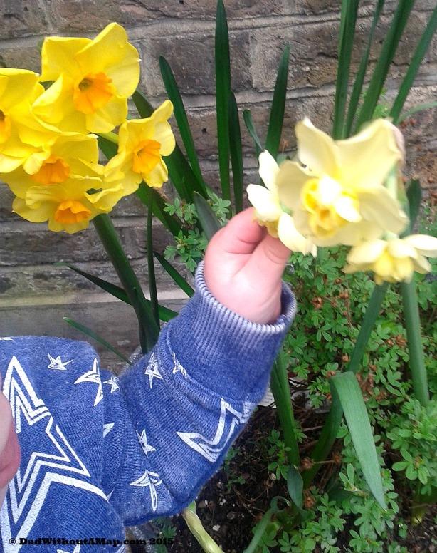 Daffodils edit