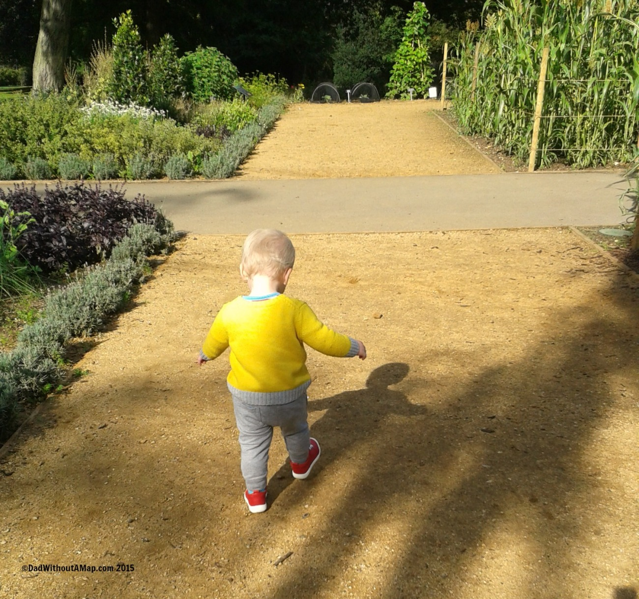 Toddler running in Horniman Mueum Gardens