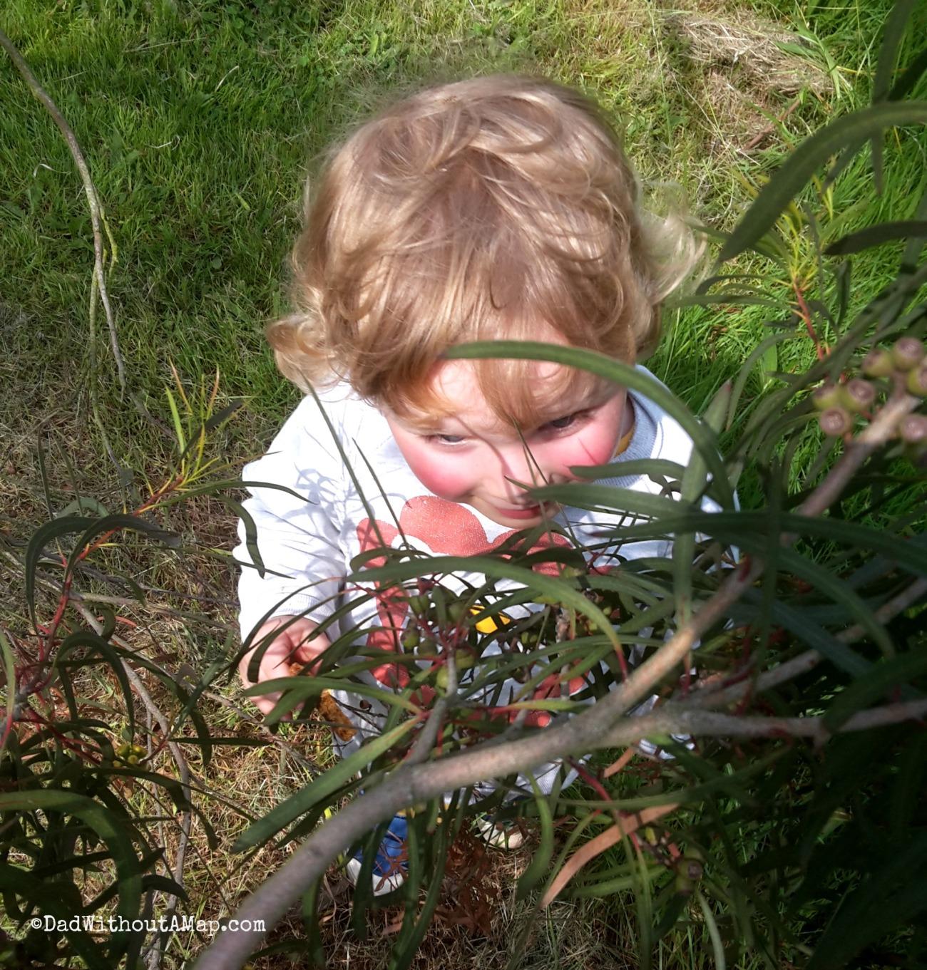 B hiding at Kew.jpg