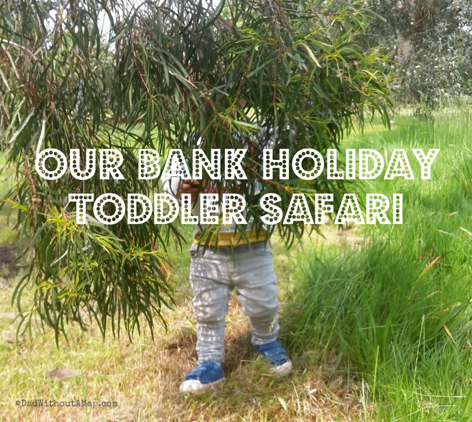 Bank holiday safari