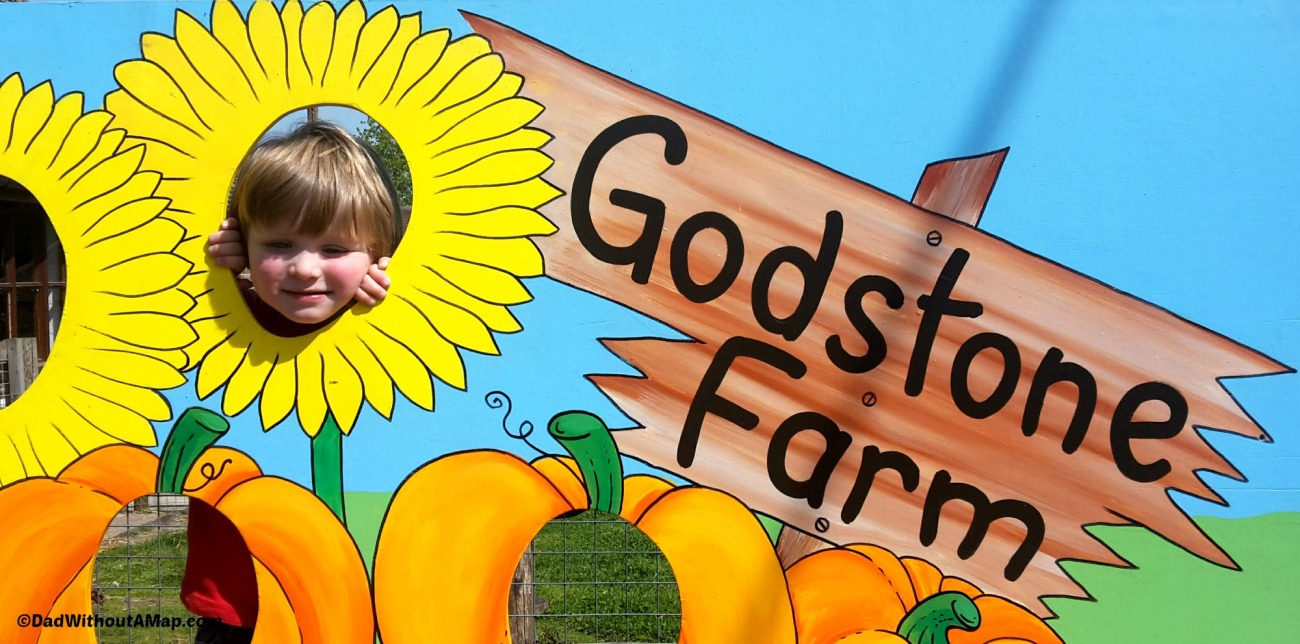 Godstone Farm sunflower face.jpg